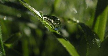 vattendroppar i gräset