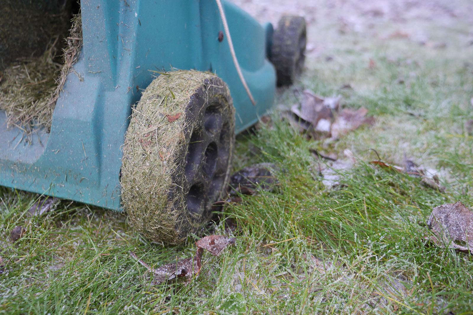 Klippa gräsmattan på julafton?