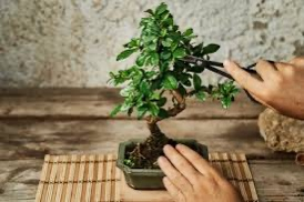 Pruning controls growth