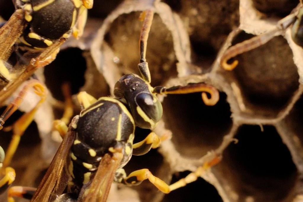 foto macro vespa