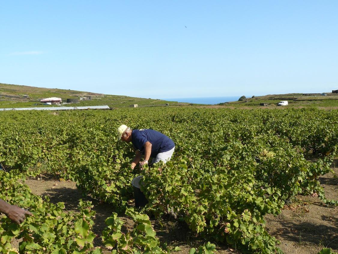 Lo stupore dei paesaggi agricoli  Martino Ragusa il Blog