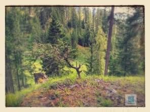 Minibaum im Wald