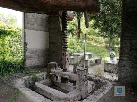 Torkelbaum im Heidiland