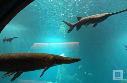 Blick aufs riesige Aquarium