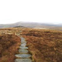 Back in the Hills - 12 miles in the Cheviots over Shillhope Law and Windy Gyle, just me and the British Army!