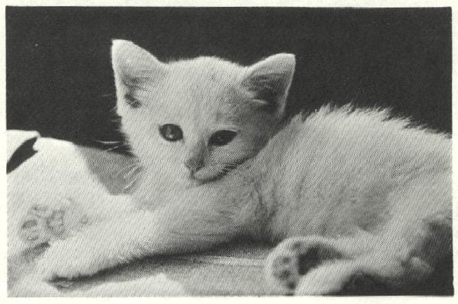 L64-1