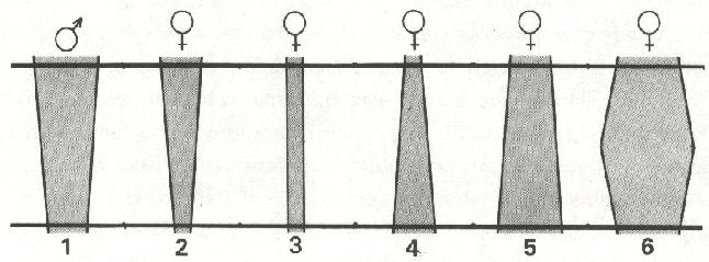 L76-4