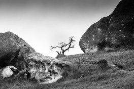 castle hill (1 of 1)-12