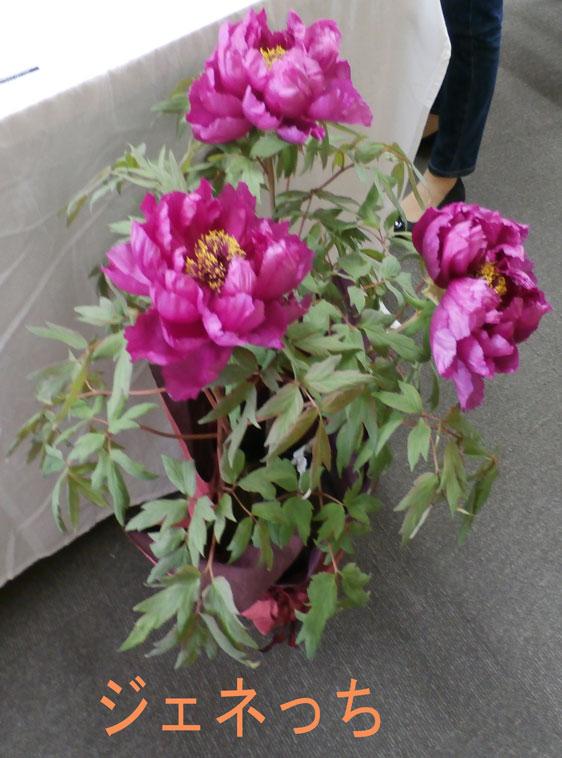 イイハナの母の日のお花