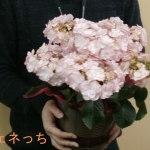 2014年父の日の贈り物、お花とコーヒーのセットはいかがですか?