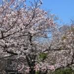 春のフラワーキャンペーン