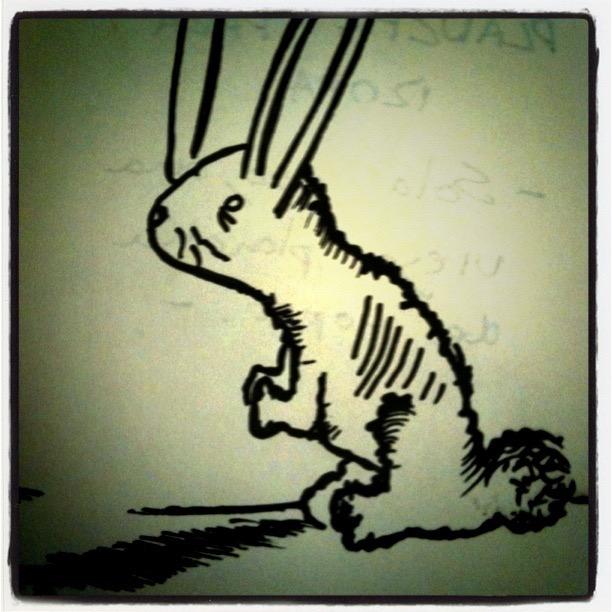 Conejo de mago pobre.