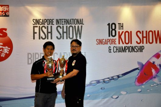 18th Singapore Koi Show & Championship 2014 Award Presentation Mini Champion Kinginrin Shiro Utsuri  Owned by Lester Pang Bred by Marugen Koi Farm, Singapore