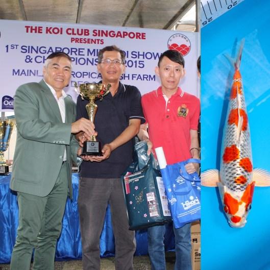 1st Singapore Mini Koi Show & Championship 2015 Baby Champion Non-Gosanke Best-In-Size (25Bu) 1st Prize Hikari Moyomono (25Bu) Offspring of