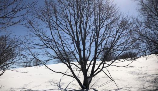 【登山】冬の(春?)の塩谷丸山をスノーシューで登ってきた!