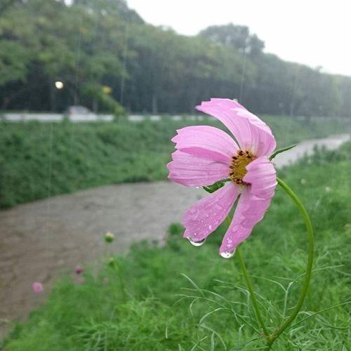 伊丹はどしゃ降り滝のような雨。雨は必要だけど、もう少し優しく降ってね