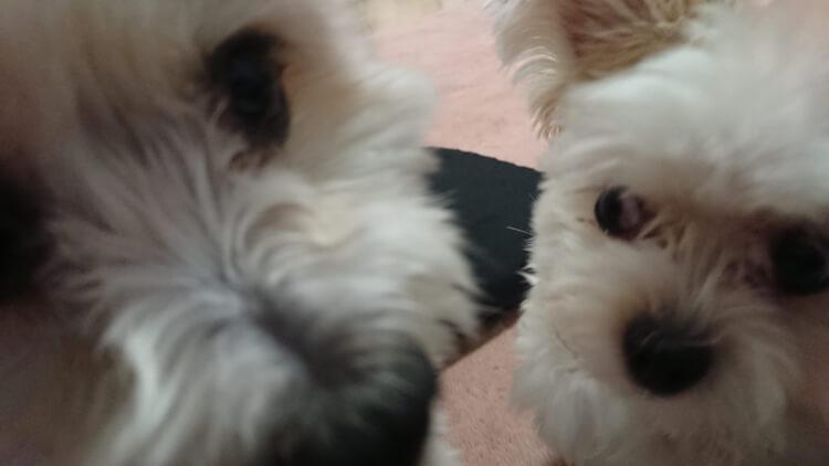 ミックス犬の顔アップ画像