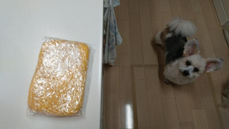 完成したタルト生地と可愛いミックス犬