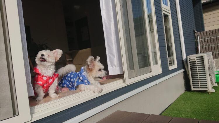 カッパを着た犬可愛い画像