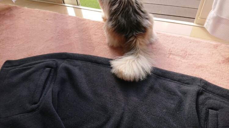 黒い服と犬の尻尾