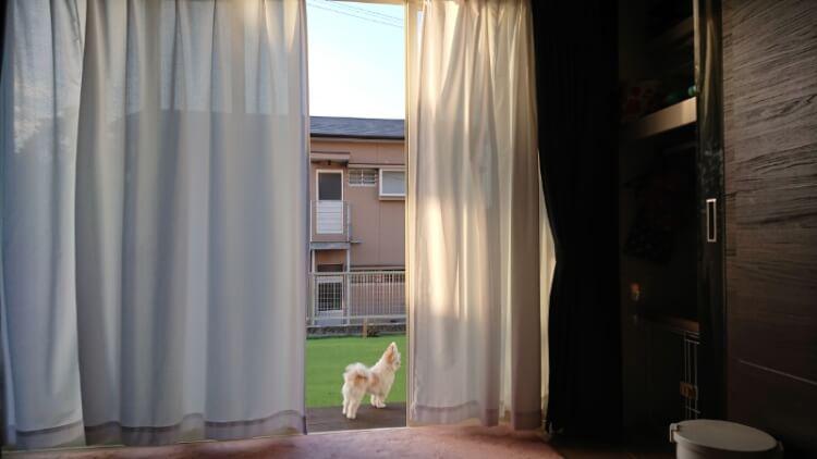 お庭に出るミックス犬