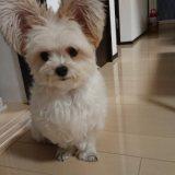 可愛いマルパピ犬画像