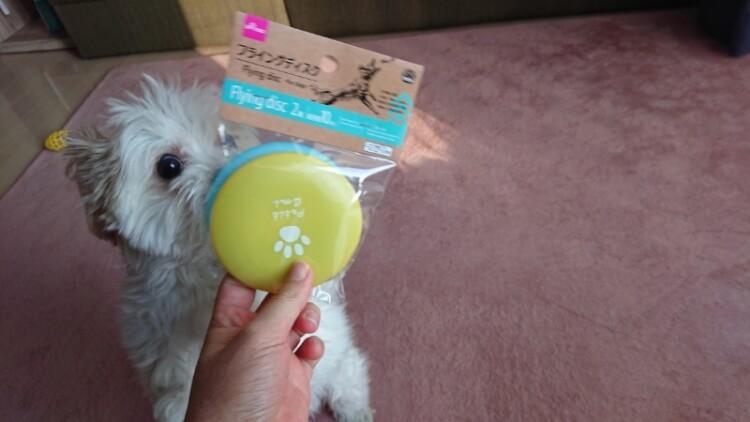 フリスビーに興味津々なミックス犬