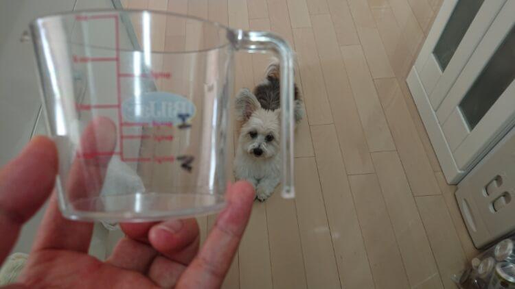 計量カップとミックス犬