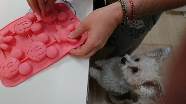 ケーキ作りを見つめる愛犬