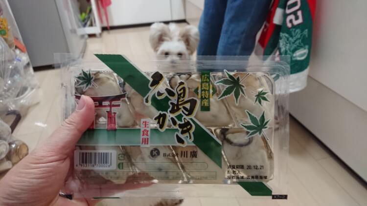 牡蠣とミックス犬