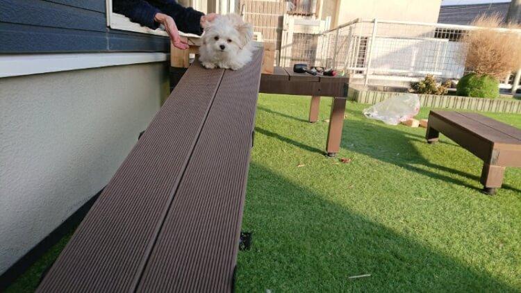 スロープの上で伏せして動かなくなるミックス犬