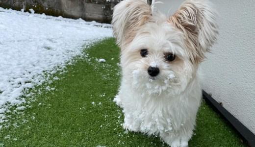 雪の中のやんちゃ犬