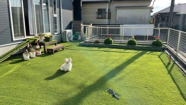 お庭にポツンと佇むミックス犬
