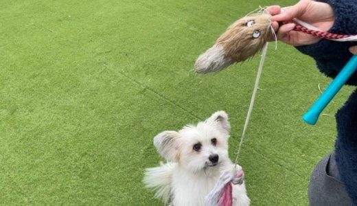 犬と引張っこ遊び