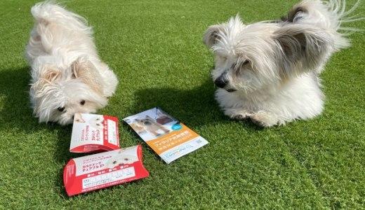 愛犬を守るフィラリア抗原検査と予防薬のカルドメックチュアブルP