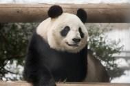 やはりパンダは大人気。開園早々に立ち寄った時は余裕で見られたのですが、帰りには人集りが多くまともに見られない状態でした。