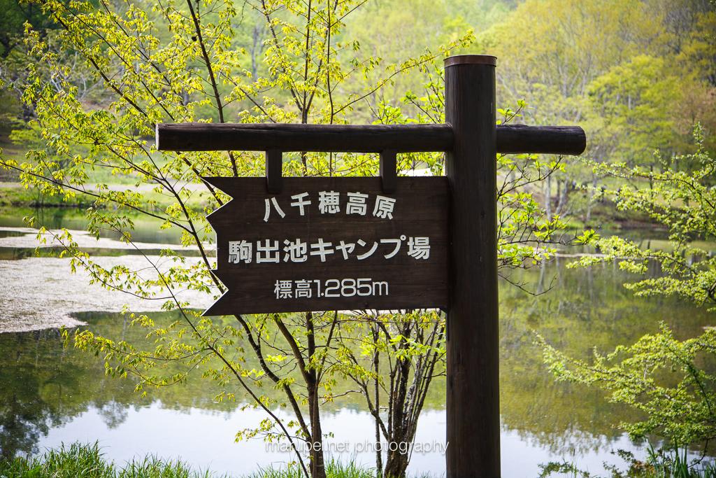 思い出と新緑の駒出池
