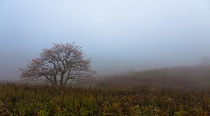 霧の高ボッチ