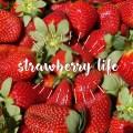 卡布邱採草莓