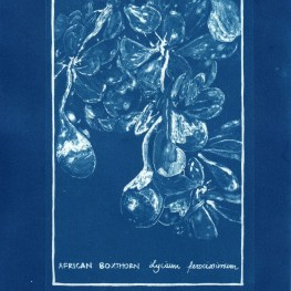 cyanotype002-for-web