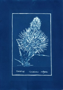 cyanotype007-for-web