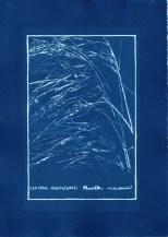 cyanotype010-for-web