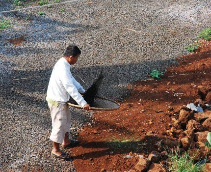 蚕糞の利用法