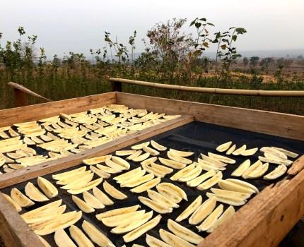 ドライバナナ作り その1