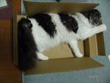 さぬきうどんの箱は、愛猫の