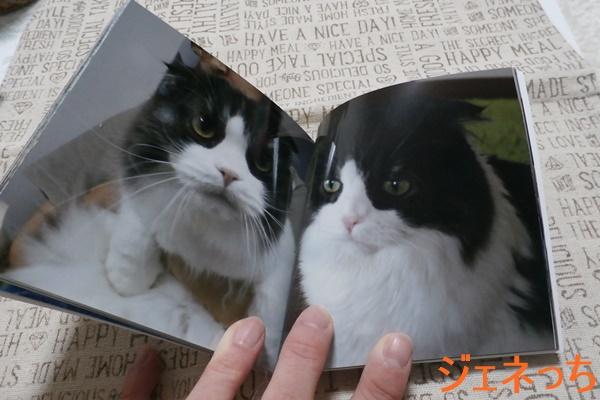 CDサイズのフォトブック愛猫の写真