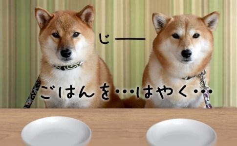 犬用メニューが充実のドッグカフェまるっと