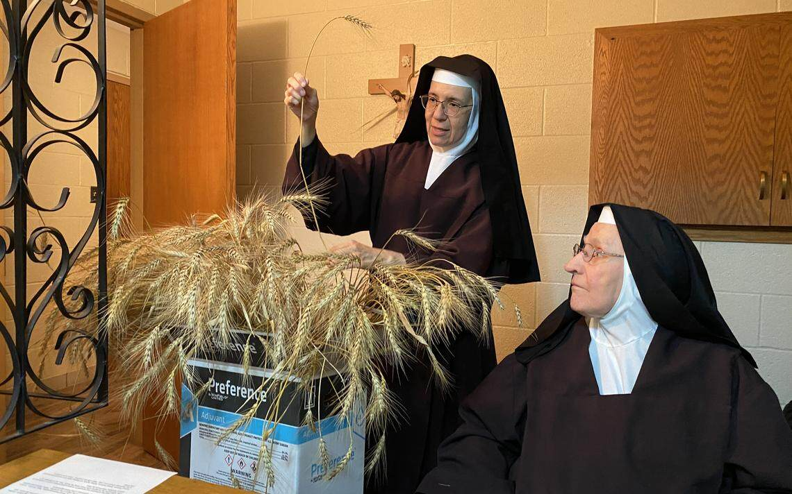 Mother Madonna (left) and Sister Margaret Mary assess a bundle of wheat, some of which will be placed at the Our Lady of the Prairies shrine on Sunday, Aug. 15. The wheat was donated by a nearby farmer. Roxane Salonen / The Forum