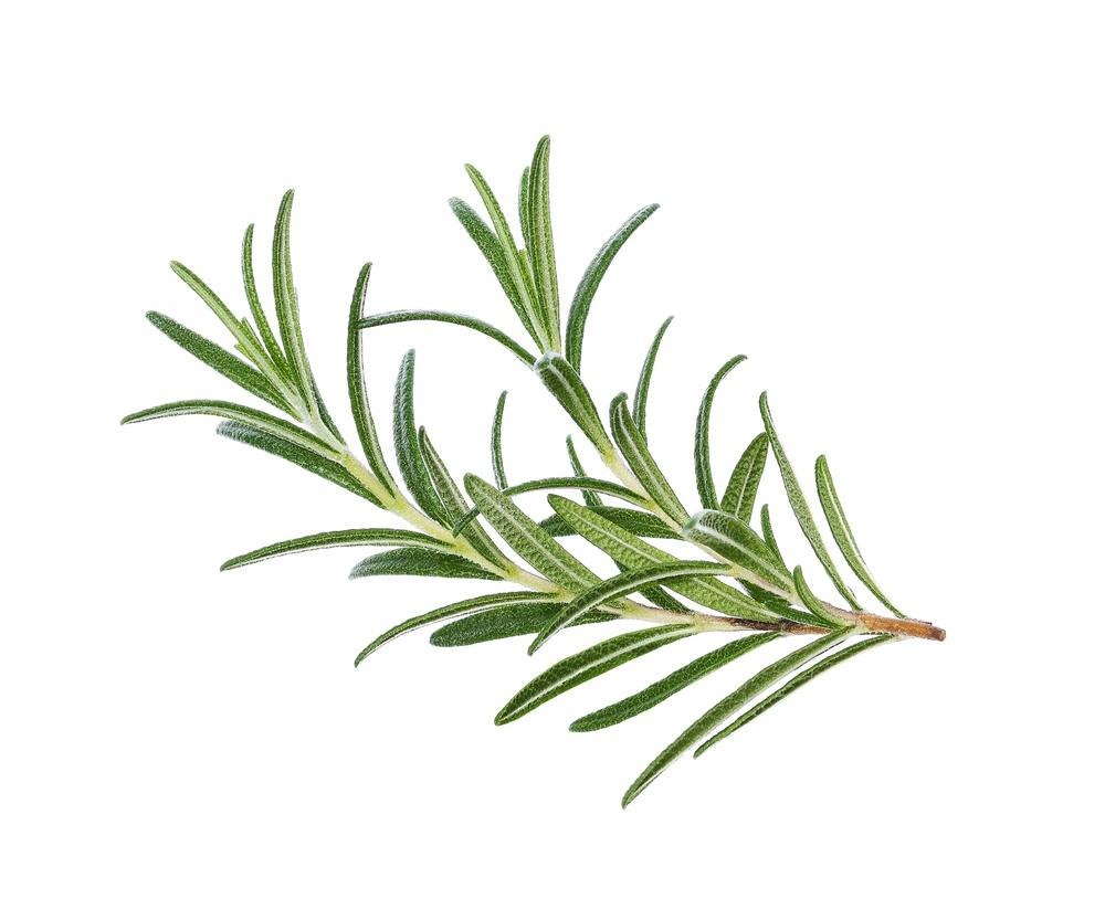 The Best Rosemary Substitutes That May Surprise You
