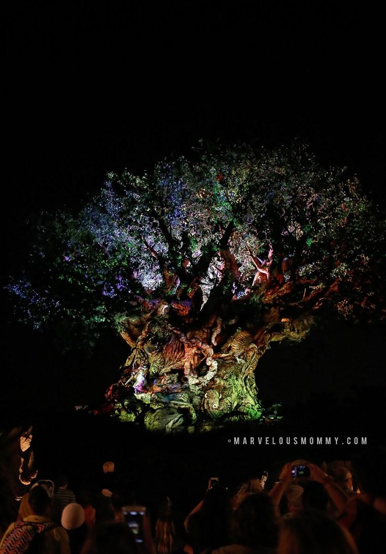 Disney World-4576-BLOG
